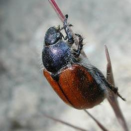 insekto - isang insekto