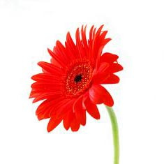 Kwiat - አበባ