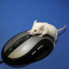 een muis - миша