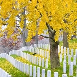 墓地 - temető