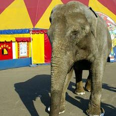 цирк - ein Zirkus