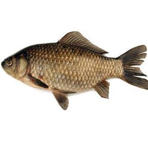 peşte - मछली