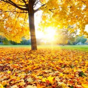 есен - 秋