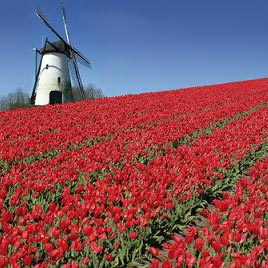 ኔዘርላንድ - Holanda