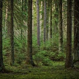 een woud - ліс