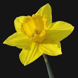 sárga - желтый